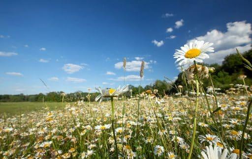 Projekttyp Wertvolles Grünland bei AgoraNatura